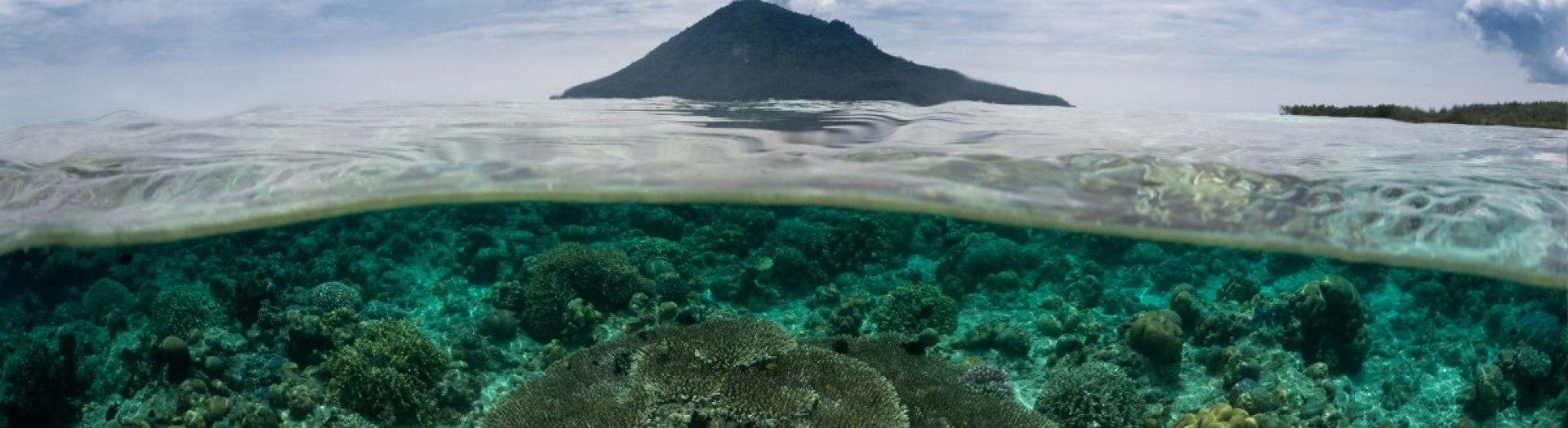 North Sulawesi : Fauna, volcanoes and coral reefs