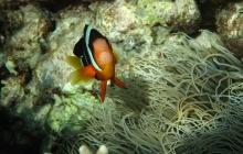 Snorkeling sur l'île de Menjangan (B-L)