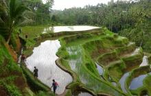 Arrivée à Bali - Ubud