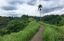 Ubud – Randonnée dans les rizières – Visite