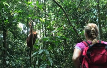Parc National de Gunung Leuser - Trek