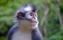 Bukit Lawang – Parc National de Gunung Leuser (B-L-)