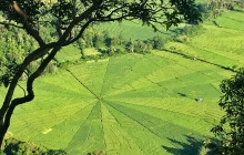 Pusut Rice fields - Cunca Wulang - Boarding
