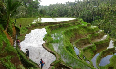Bali : entre nature et culture